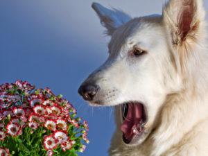симптомы аллергии на собаку