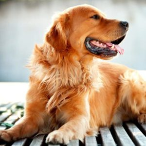лечение аллергии на собаку