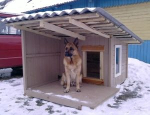 собачья будка требования к расположению