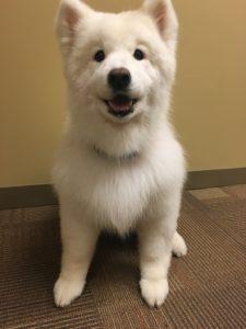 собаки породы флуф