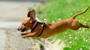 правила прогулки с собакой