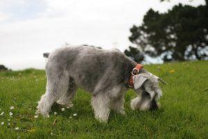 признаки паразитов у собаки