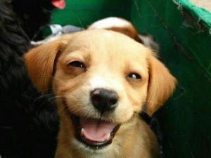 признаки наличия паразитов у собаки