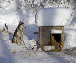 как утеплить будку для собаки на зиму сеном
