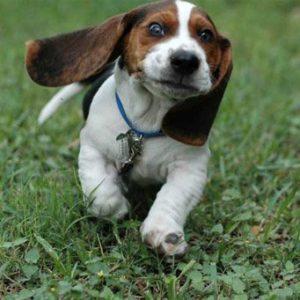 влияние специального корма на организм собаки