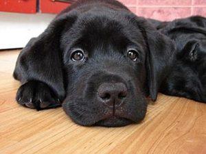 у собак глисты