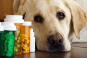 борьба с глистами у собак