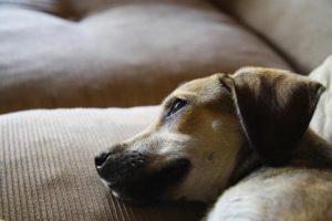 специфика ухода за течной собакой