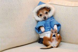 одежда для маленьких пород собак