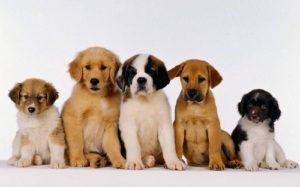клички для маленьких собакек