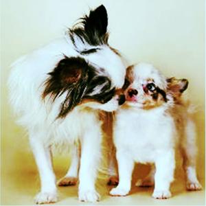 корм для беременных собачек