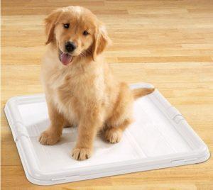 как приучить щенка к туалету правильно
