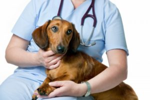 профилактика глистов у собак