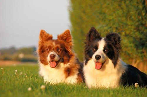 Самые красивые собаки с фото - pet-mirru