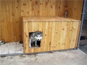 обогрев будки для собаки