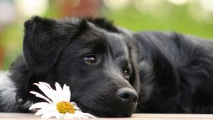самые красивые и популярные собаки