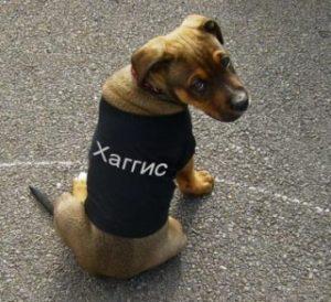 кличка питомцам собакам