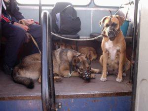 транспортировка собаки в общественном транспорте