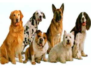 большие собаки