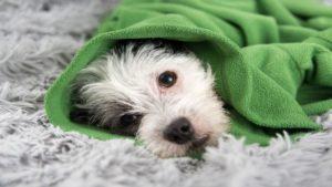 профилактика блох у собак