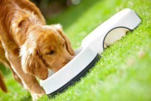 питание собак