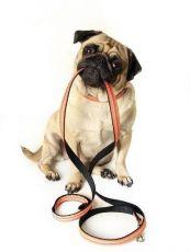 сведения о выгуле собак