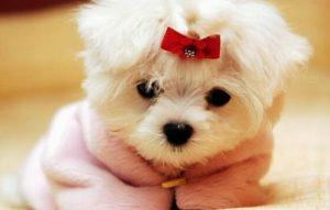 звонкие имена для маленьких собак