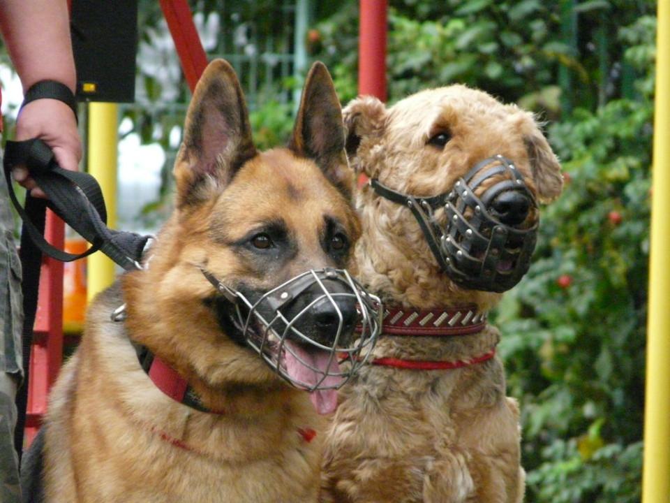 Каким собакам нужен намордник по закону Да