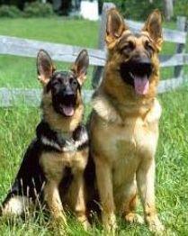клички собакам