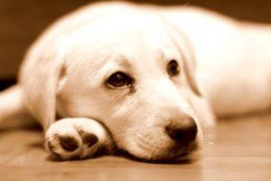 собака болеет глистами