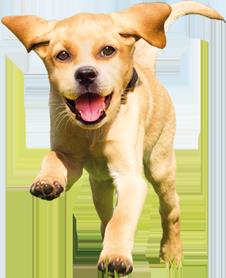 дог чау корм для собак спрос