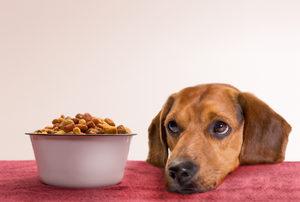 собака и корм