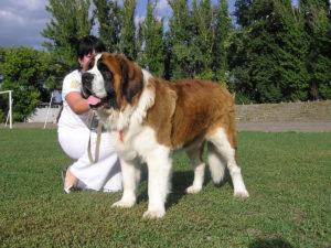 особнность больших собак