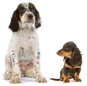 правильная норма кормления собак