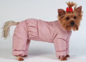одежда у маленьких собак