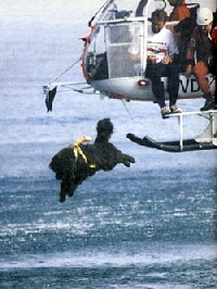 ньюфаундленд собака спасатель на воде