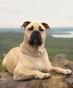 ка де бо собака