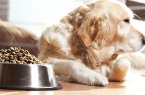 приучаем собаку к сухому корму