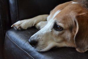 как определить глисты у собак