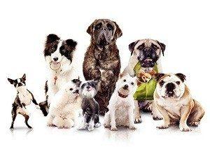 собаки разных размеров