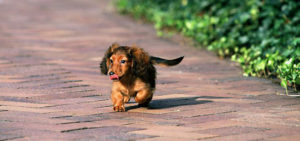 стоит ли подбирать собаку на улице