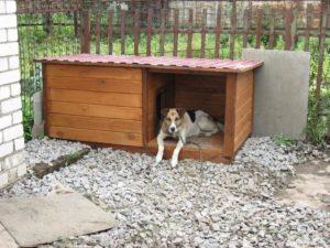 будка для собаки требования к расположению