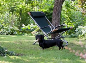 правила поведения собаки в дачных условиях