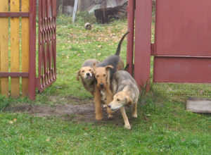 безопасность собаки на даче