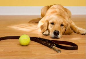 причины стерилизации собак