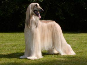 смена шерсти у собаки