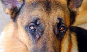 лечебные мероприятия у собак