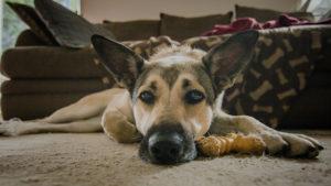 энтерит у собак