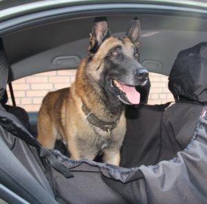 первое знакомство собаки с автомобилем