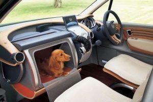 перевозка собак в машине